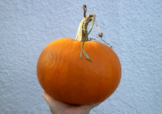 Large pumpkin being held up by a hand with a white wall in the background