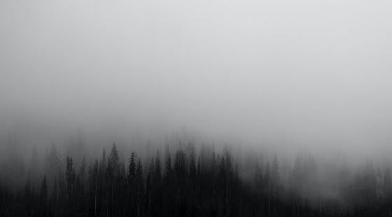 outline of tops of forest trees being submerged in fog. The picture is in black and white and you are only able to see a few trees in the foreground before they are submerged in fog